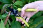 Preview: Micro Secateurs