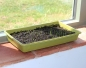 Preview: Bamboo Seed Tray