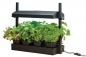Preview: Micro Grow Light Garden Black