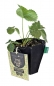 Mobile Preview: Eco Tyre Plant Pot