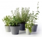Preview: Sophie Conran Ombre Pots - Grey