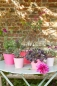 Preview: Sophie Conran Ombre Pots - Raspberry