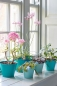 Preview: Sophie Conran Ombre Pots - Green