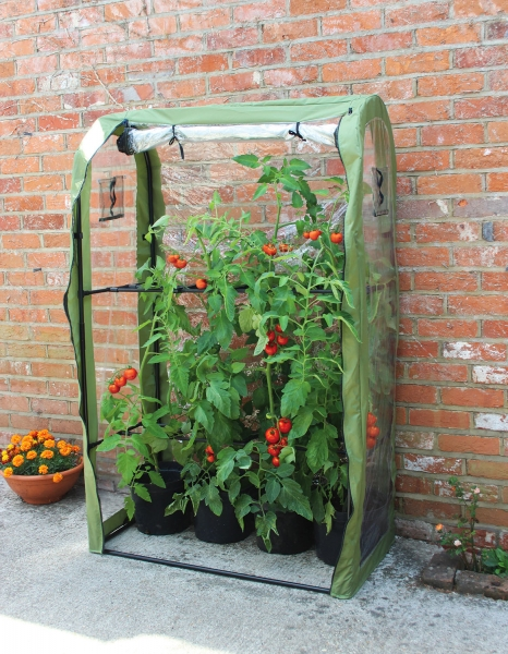 Tomato Crop Booster