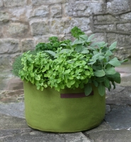 Vigoroot Herb Planter